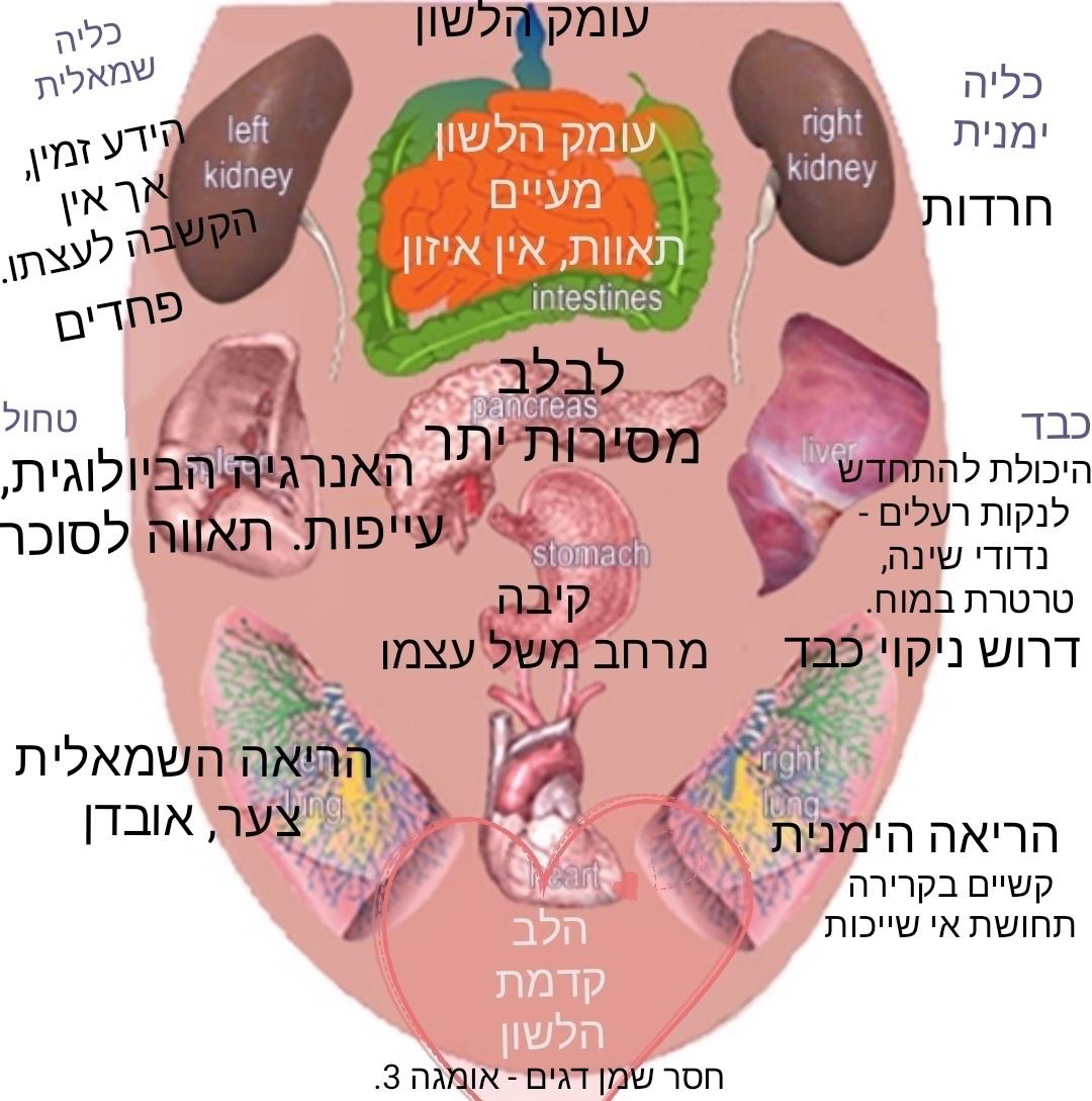 אבחון על-פי הלשון: הלשון היא שריר, וכמו כל שריר היא ניזונה מכלי דם רבים.עושר אספקת הדם לאזור הלשון מאפשר לה לשנות את המרקם והרקמה שלה. זו הסיבה שכל מחלה או דיסהרמוניה פנימית המתחוללת בגוף מקבלת ביטוי על פני הלשון. החלק העמוק של הלשון מייצג את הכליות והפחדים - כאשר הצד העמוק השמאלי בלשון משקף את עוצמת הפחדים. במרכז הלשון משתקפת הקיבה ומערכת העיכול שמשקפות עמוד שדרה נפשי, תחושת ביטחון עצמי ואת היכולת לעמוד על שלך, חציית גבולות, שתלטנות, חולשת אני ניכרת כאן לצד מה שמכונה מרחב משל עצמך (תפיסה מרחבית, מקום משלך). החלק הקדמי ביותר, עד קצה הלשון, מייצג את הרגשות ואת מצב הלב. המפה למעלה, מפרטת עוד אברים, תחושות ומצבי נפש שמשפיעים על מצב הגוף. למשל הטחול בו ארחיב למטה. צורתה, צבעה, ומרקמה של הלשון קובע שיש בעיה, כך גם החיפוי שלה, לחות ורטיבות, חריצים, רעד, נוקשות, פצעונים וכמובן חיוניות. כל היבט מייצג עבורך התנהגות נפשית-פיסיולוגית שונה, וכך, על ידי אבחנה נכונה, ניתן להגיע לתמונה הפנימית משלימה ומדויקת של בריאותך ובריאות האדם בכלל. אני נעזר בלשון בעיקר כאשר מגיע אדם שסובל ופרטי מחלה מזעריים בלבד ועומדים לרשותי חסרים בבדיקות דם: היסטמין והומוציאסטין - תמיד חסרים, אבל לעתים גם אוריאה ו-BUN וכמובן ה-GFR.אם יש לכם סימני שיניים בצד הלשון - חספוס מטריד, התבוננו בטחול. מדד זה חשוב במיוחד במצבים של חוסר ברזל שקשה להבין את סיבתו. הטחול פועל בתיאום עם הקיבה, הוא שאחראי על מחזור הברזל מתאי דם קשישים - תאי דם אדומים (כדוריות) בנות 120 יום באים לסיים את חייהם בטחול. הטחול דולה מהם את הברזל ומשתמש בו לבניית תאי דם אדומים חדשים - כדוריות דם חדשות וצעירות. סימני שיניים בצידי הלשון מצביעים גם על כך שההצטננות שלכם מקורה בטחול. הטחול כמנטרל חיידקים נחלש. פעילות הטחול יכולה להיות אטית ויש לכך סימן נוסף בטן נפוחה, וגזים מנפיחות. איכלו מאכלים שמזינים את הטחול: שעועית מש, דוחן, ושיבולת שועל גם ליצי, דלעת, גזר לבן, שומר, בטטות ולפת ואל תשכחו את הכלורופיל: חסה, אצות ועלי סלק. אבחון על-פי הלשון.Diagnosis by the tongue